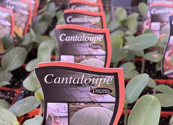 Cantaloupe  -  punnet