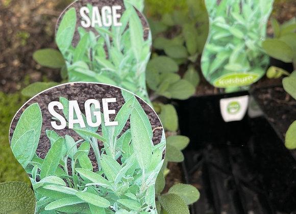 Sage - 100mm pot