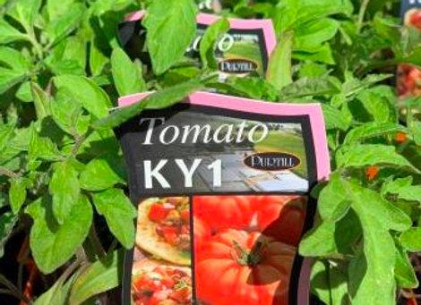 Tomato - KY1 punnet