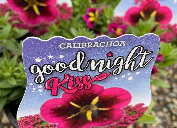 Calibrachoa - Goodnight Kiss 14cm pot