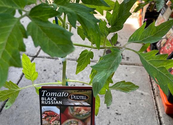 Tomato - Black Russian ADVANCED