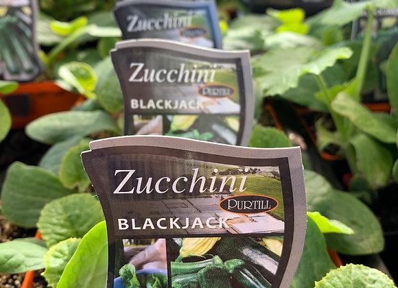 Zucchini Blackjack punnet