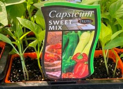 Capsicum - Sweet Mix punnet