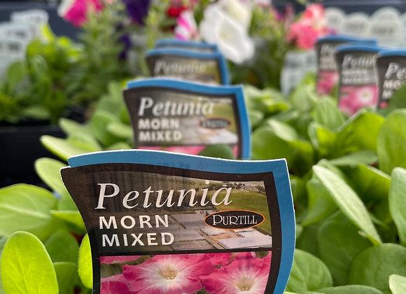 Petunia - Morn Mixed punnet