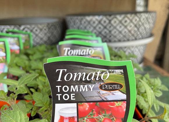 Tomato - Tommy Toe punnet
