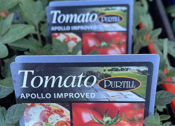Tomato - Apollo Improved punnet