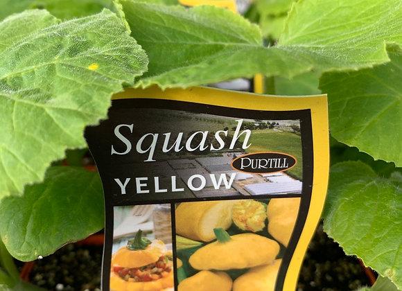 Squash - Yellow punnet