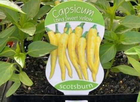 Capsicum - Long Sweet Yellow punnet