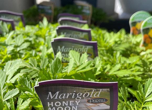 Marigold - Honey Moon punnet