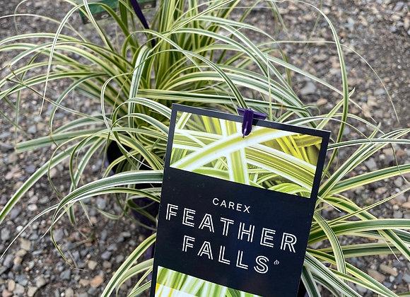Carex - Feather Falls14cm pot PGA