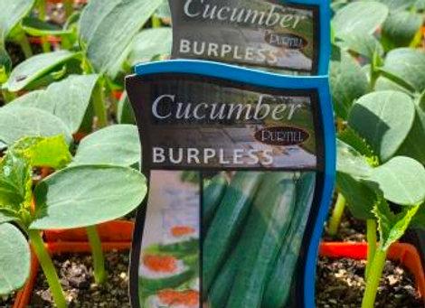 Cucumber - Burpless punnet