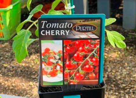 Tomato - Sweet Bite CHERRY ADVANCED