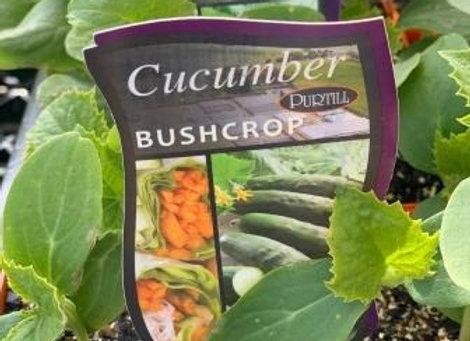Cucumber - Bushcrop punnet