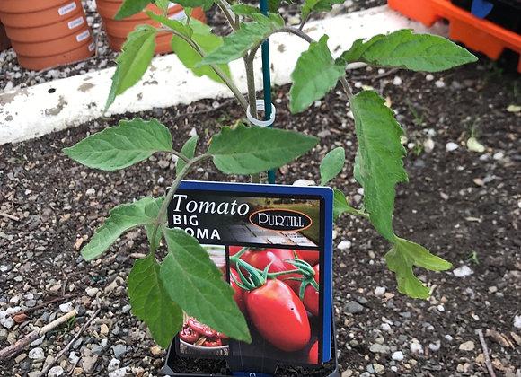 Tomato - Big Roma ADVANCED