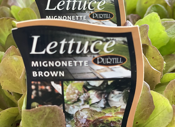 Lettuce - Mignonette Brown punnet
