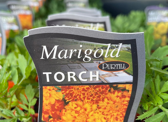 Marigold -  Torch punnet