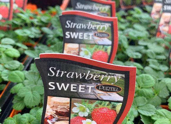 Strawberry - Sweet punnet
