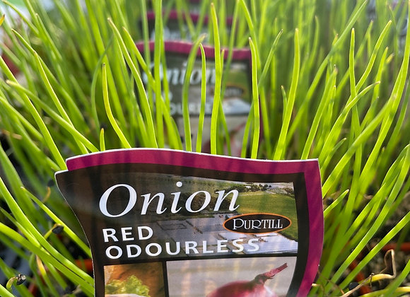 Onion - Red Odourless