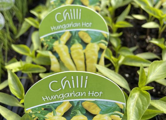 Chilli - Hungarian Hot punnet