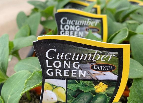 Cucumber - Long green punnet