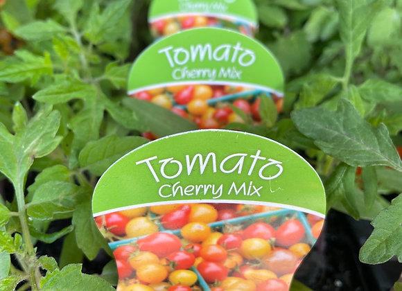 Tomato - Cherry Mix punnet