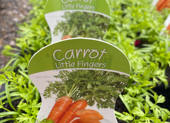 Carrot - Little Fingers punnet