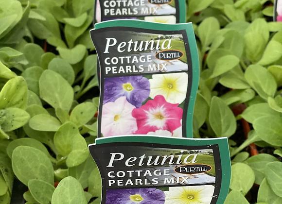 Petunia - Cottage Pearls