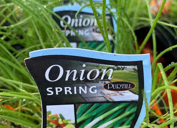 Spring Onion - punnet