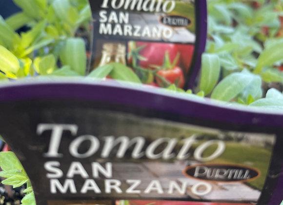 Tomato - San Marzano punnet