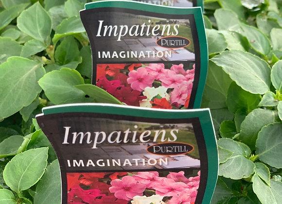 Impatiens - Imagination punnet