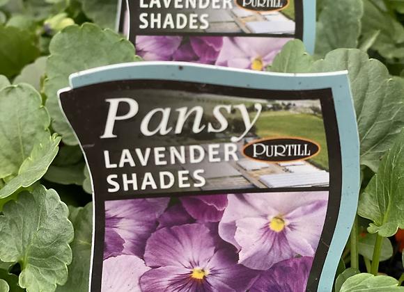 Pansy-Lavender Shades