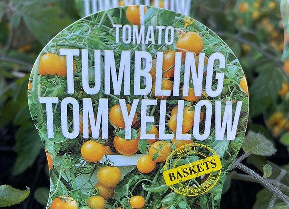 Tomato - Tumbling Tom Yellow ADVANCED