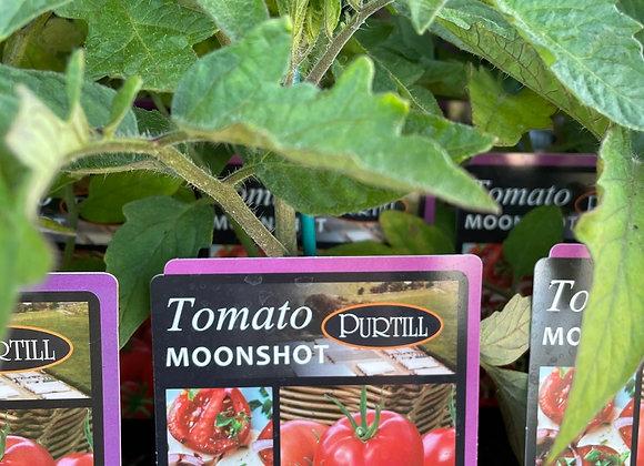 Tomato - Moonshot ADVANCED