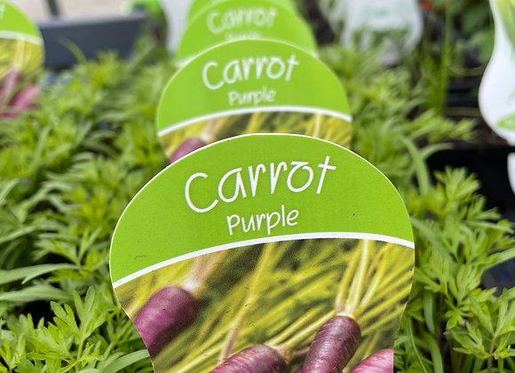 Carrot Purple- punnet