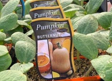 Pumpkin - Butternut punnet