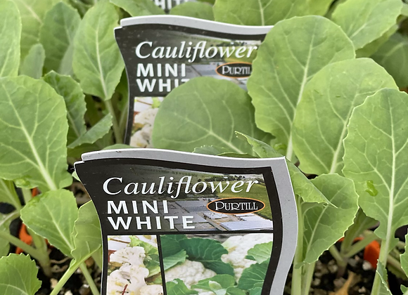 Cauliflower-Mini White