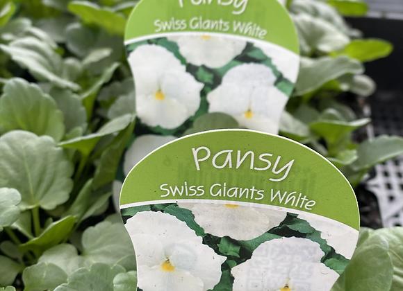 Pansy-White