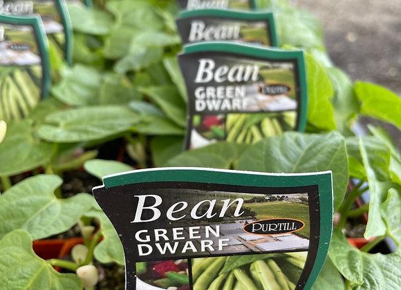 Bean - Green Dwarf punnet