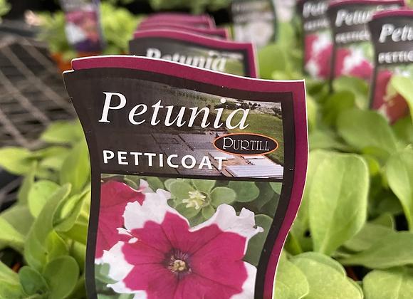 Petunia - Petticoat purple punnet
