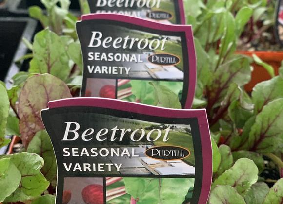 Beetroot - punnet