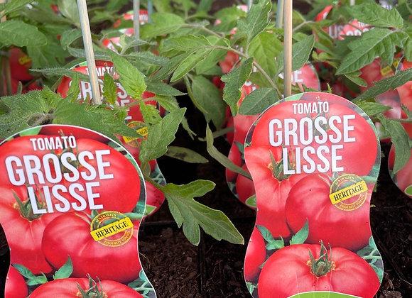 Tomato - Grosse Lisse ADVANCED