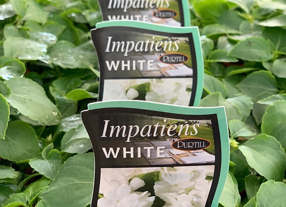 Impatiens - White punnet