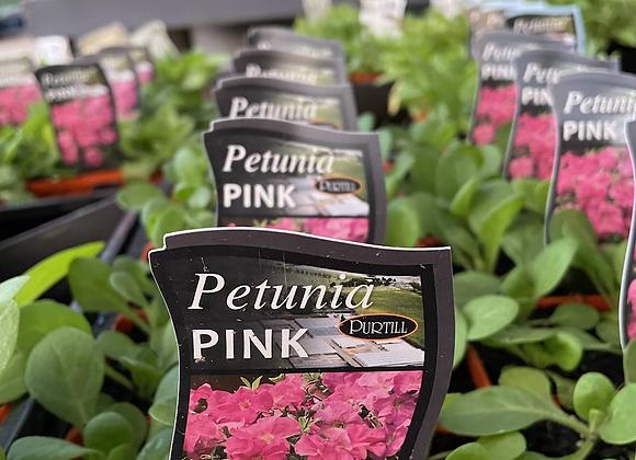 Petunia - Pink punnet