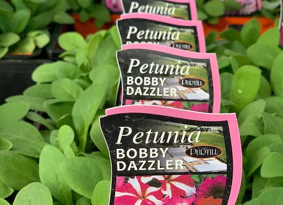 Petunia - Bobby Dazzler punnet