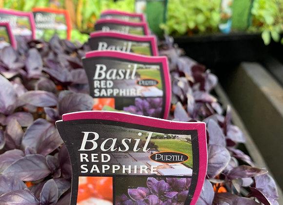 Basil - Red Saphire punnet