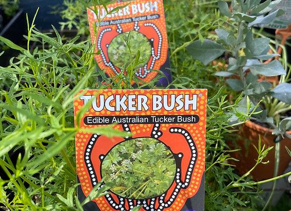 Tucker Bush - Sea Parsley