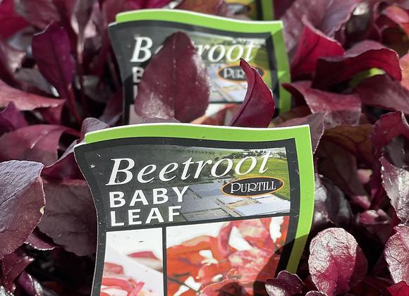 Beetroot-Baby Leaf punnet