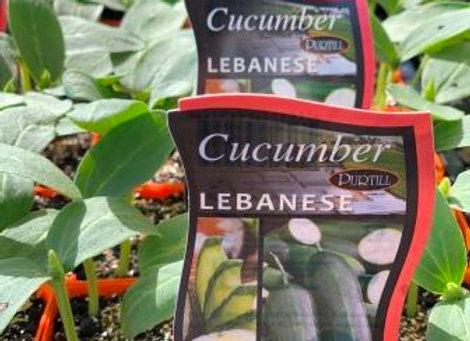Cucumber - Lebanese punnet