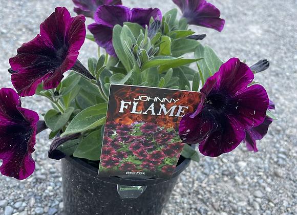 Petunia - spreading perennial Johnny Flame