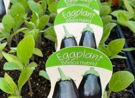 Eggplant - Bonica Hybrid punnet